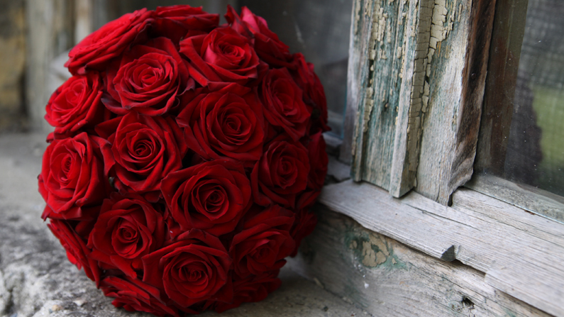 Red Roses the Symbol of True Love